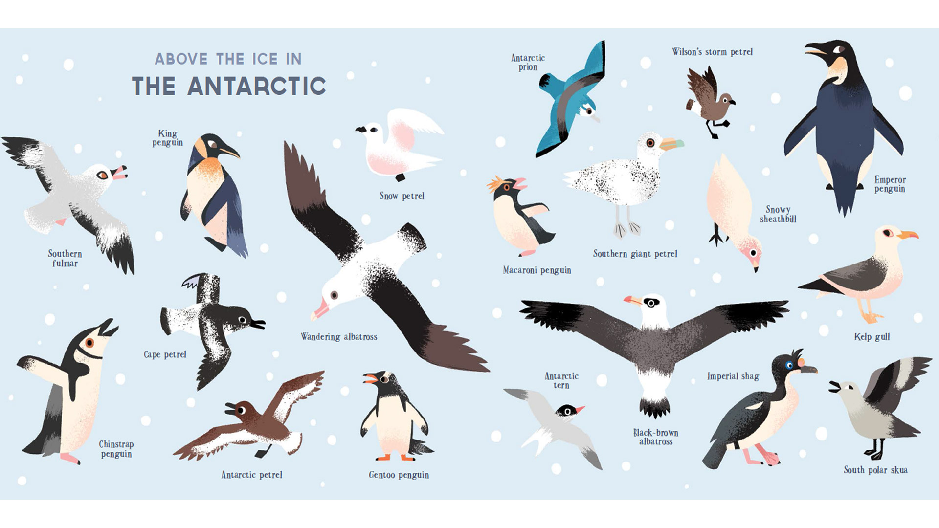 Antarctic animals list