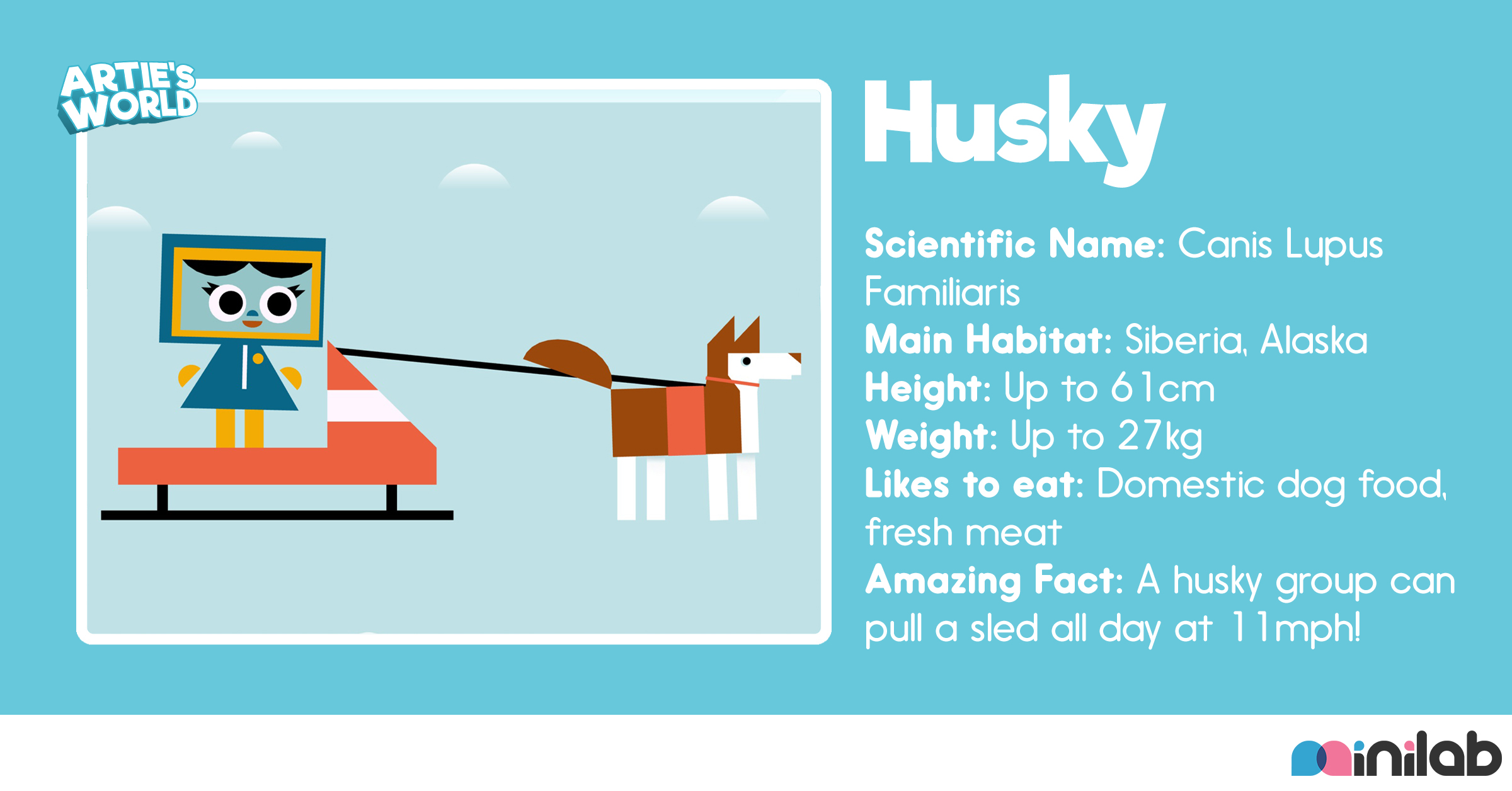 animal-bio-husky