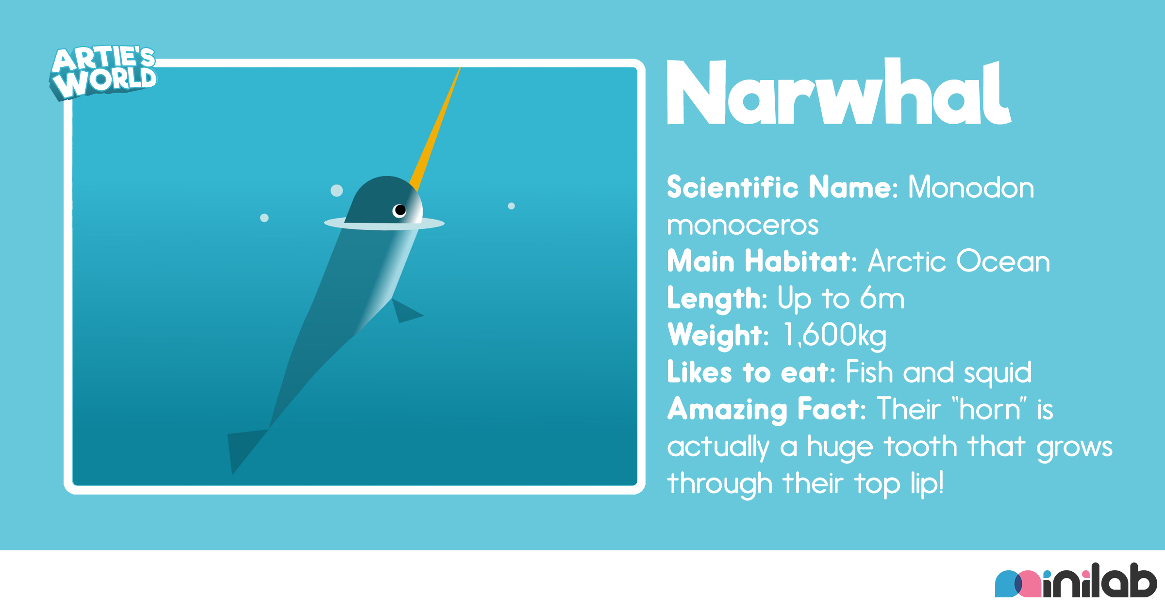animal-bio-narwhal