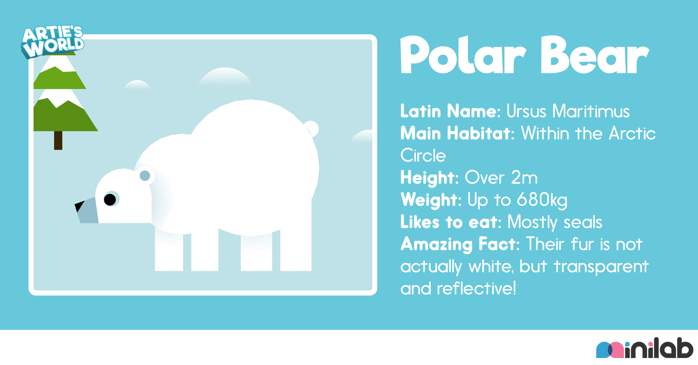 Polar bear flashcard